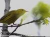 PPL Wetlands birds (33 of 33)
