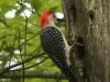 PPL Wetlands birds (4 of 33)