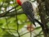 PPL Wetlands birds (6 of 33)