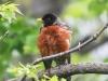 birds PPL Wetlands -10