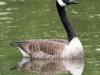 birds PPL Wetlands -12