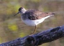 PPL-Wetlands-birds-1-of-50