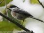 PPL Wetlands birds September 30 2017