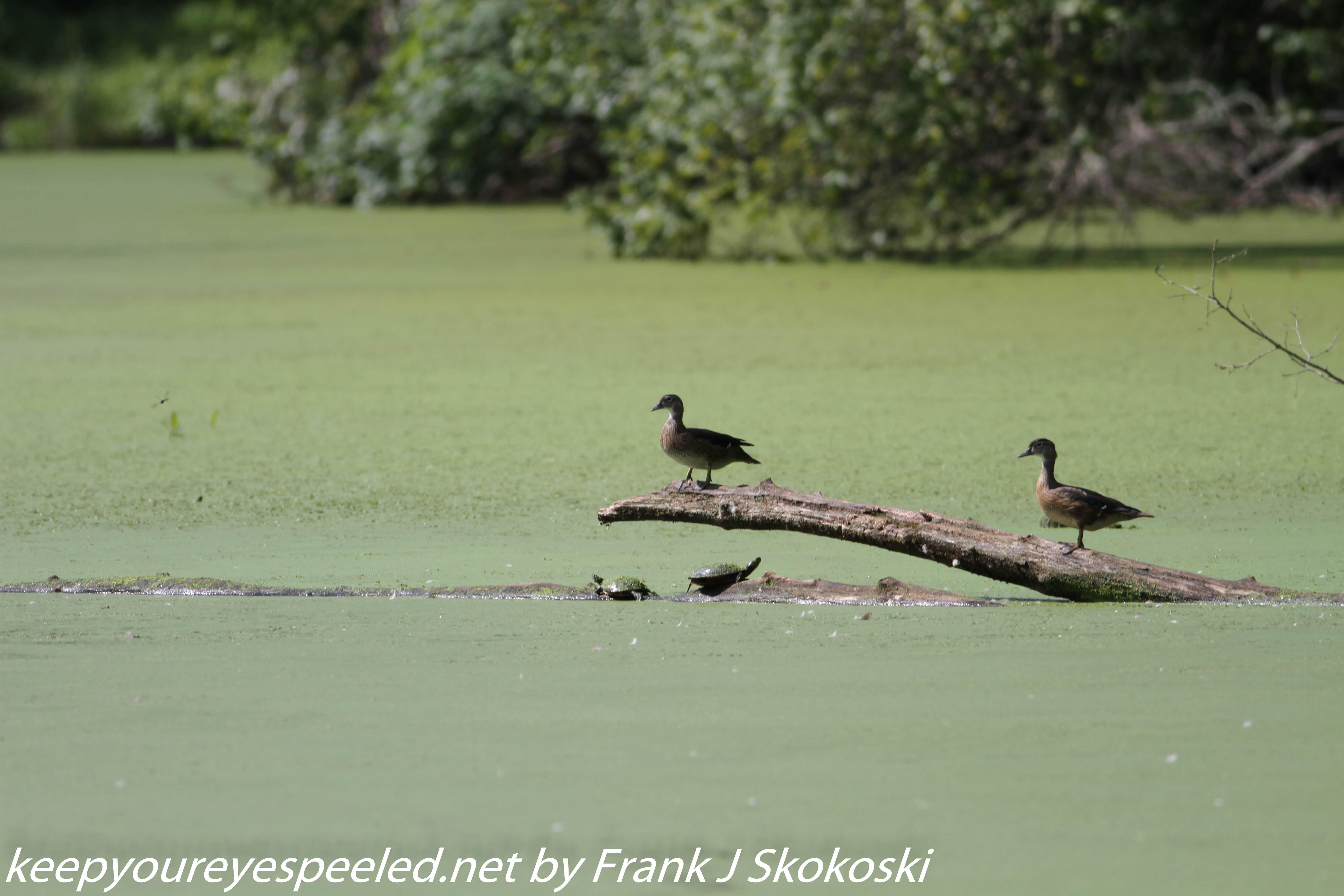 PPL Wetlands critters  (6 of 32)