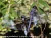PPL Wetlands critters  (17 of 32)