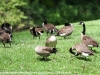 PPL Wetlands critters  (19 of 32)