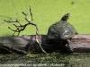 PPL Wetlands critters  (2 of 32)