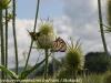 PPL Wetlands critters  (23 of 32)