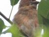 PPL Wetlands critters  (25 of 32)