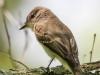 PPL Wetlands critters  (29 of 32)