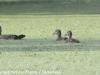 PPL Wetlands critters  (3 of 32)
