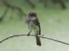 PPL Wetlands critters  (9 of 32)