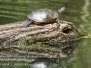 PPL Wetlands critters may 14 2016