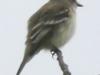 PPL Wetlands critters -12