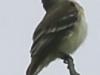PPL Wetlands critters -13