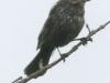 PPL Wetlands critters -14