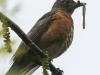 PPL Wetlands critters -3