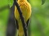 PPL Wetlands critters -9