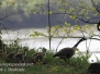 PPL Wetlands critters May 8 2016