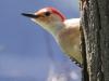 PPL Wetlands critters -10