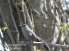 PPL Wetlands critters -11