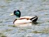 PPL Wetlands critters -17