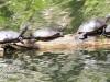 PPL Wetlands critters -18