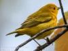 PPL Wetlands critters -4