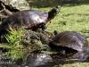 PPL Wetlands critters -5