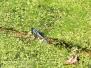 PPL Wetlands dragonflies insects June 19 2016