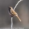 PPl-Wetlands-birds-1-of-46