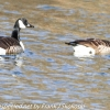PPl-Wetlands-birds-10-of-46