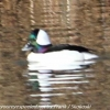 PPl-Wetlands-birds-11-of-46