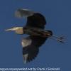 PPl-Wetlands-birds-3-of-46