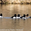 PPl-Wetlands-birds-4-of-46