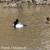 PPl-Wetlands-birds-6-of-46