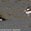 PPl-Wetlands-birds-8-of-46