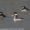 PPl-Wetlands-birds-9-of-46