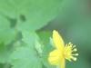 PPL wetland flower (1 of 1).jpg