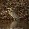 PPL-Wetlands-6-of-50