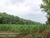 PPL Wetlands -005