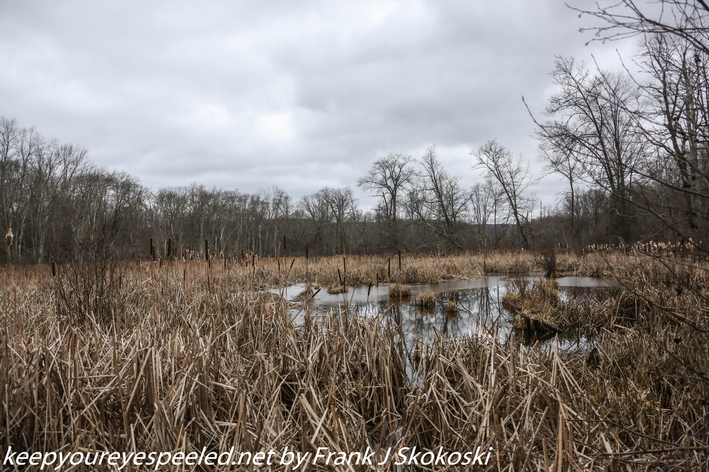 PPL Wetlands (15 of 49)