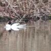 PPl-Wetlands-027