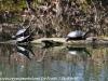PPL Wetlands  (23 of 29)