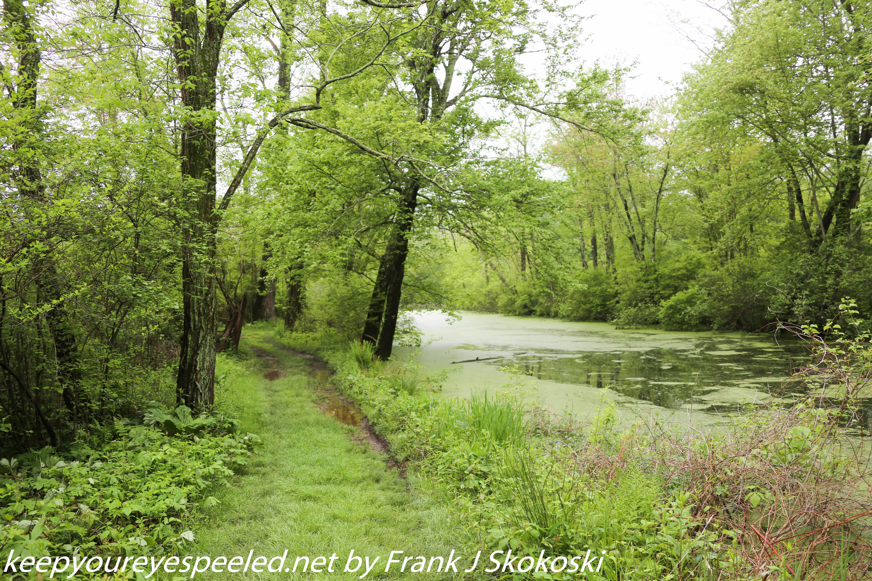 PPL Wetlands  (10 of 51)
