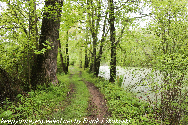 PPL Wetlands  (11 of 51)