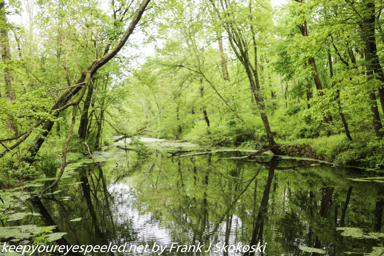 PPL Wetlands  (13 of 51)