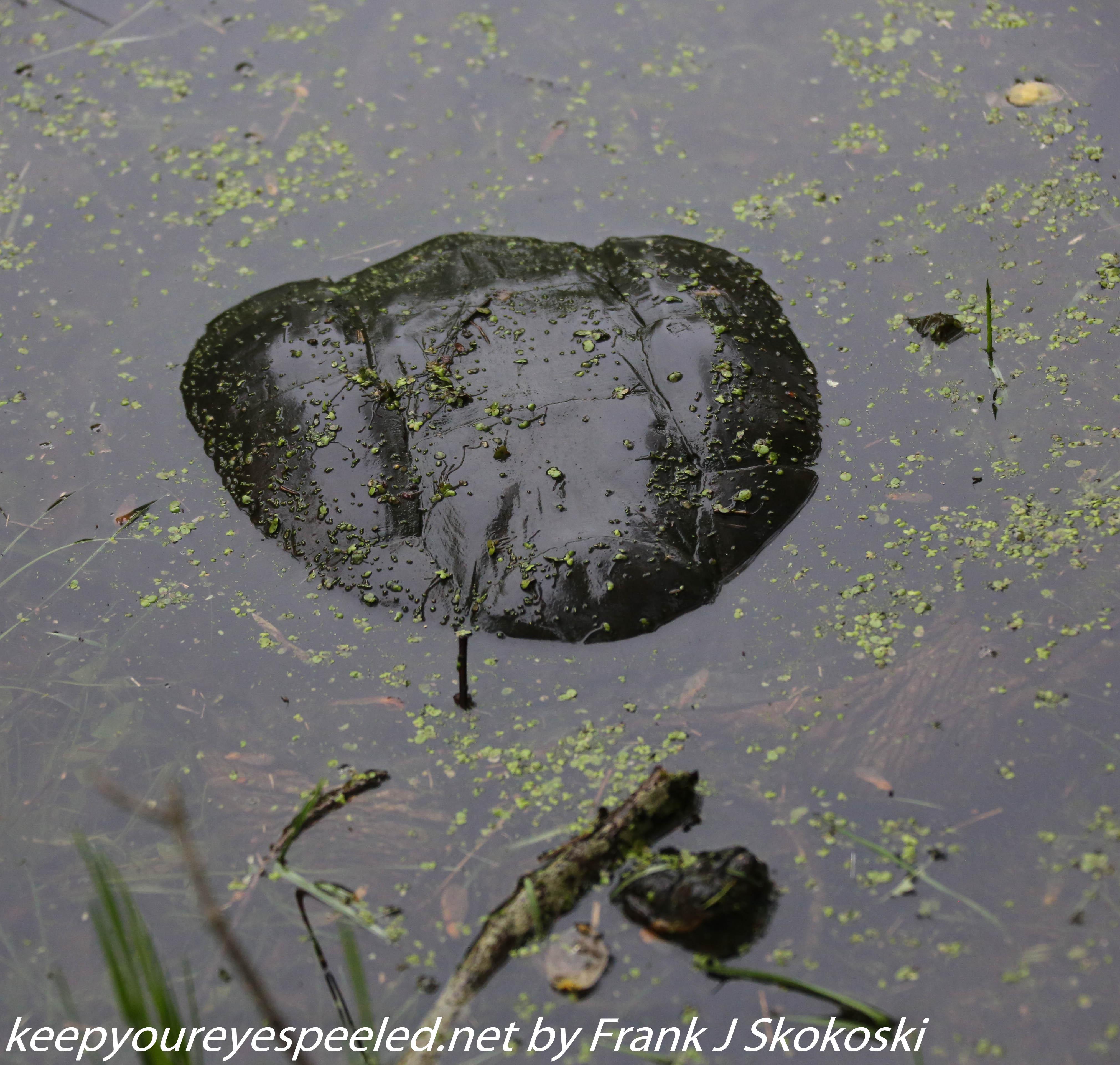 PPL Wetlands  (16 of 51)