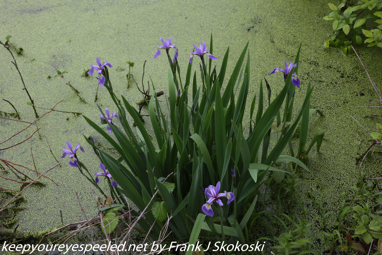 PPL Wetlands  (23 of 51)