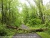 PPL Wetlands  (1 of 51)